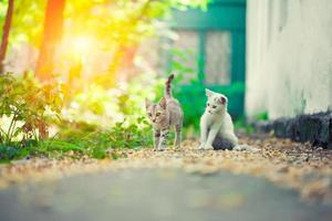 primo piano di un gatto di strada foto