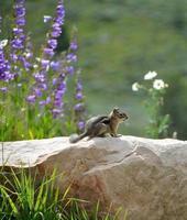 scoiattolo godendo della vista foto