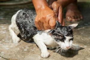 lavare il gatto foto