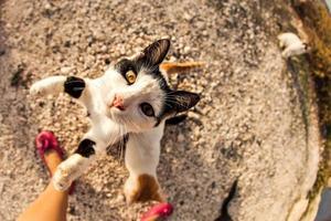 gatti per strada foto