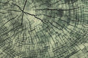 trama di sfondo in legno. legno verniciato grigio. foto