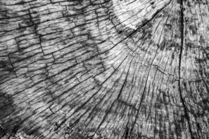 fondo di legno