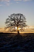 albero in controluce foto