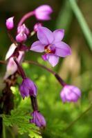 orchidea pianta in vaso foto