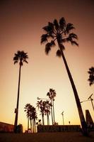 palme da spiaggia di venezia foto