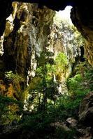 foresta di montagna - vista dalla grotta foto