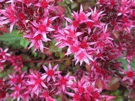 molti fiori rosa vicino gruppo