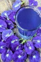 bevanda al pisello di farfalla o bluechai foto