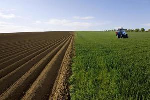trattore nel campo di grano giovane accanto al campo arato foto
