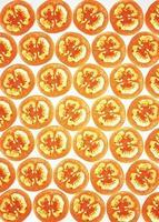 fette di pomodoro su bianco, retro illuminato foto