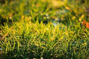 primo piano a macroistruzione di erba illuminata foto