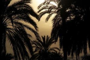 Siluetta delle palme della Spagna foto