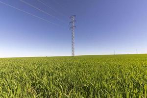 torre elettrica nel campo verde foto