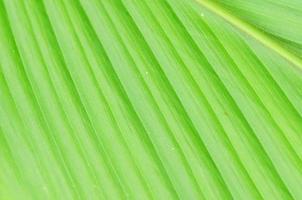 linee e trame di foglie di palma verdi foto