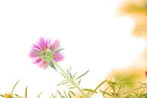 sfocatura fiore