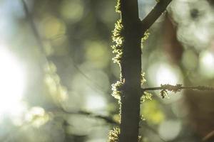 tronco d'albero muschioso con sfondo bokeh