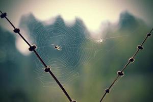 ragno alla luce foto