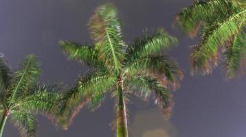 vista della palma di notte foto