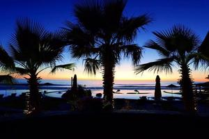 Siluetta della palma con il tramonto foto