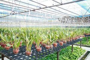 vivaio di orchidee foto