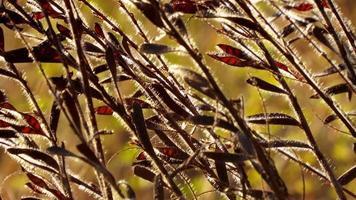 sfondo di pianta di grano di mare foto