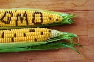 concetto di OGM foto