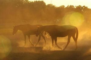 cavalli in polvere foto