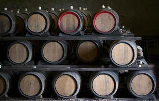 botti di vino foto
