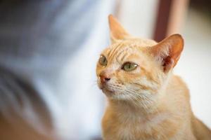 simpatico gatto che osserva via. foto