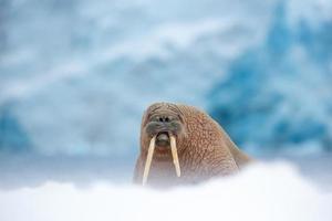 boss del ghiacciaio foto