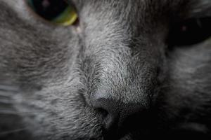 museruola di gatto foto