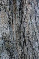 legno di corteccia