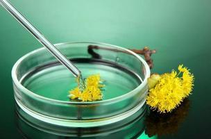 ricerca chimica nella capsula di Petri su sfondo verde scuro foto