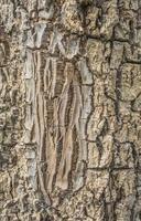 corteccia di legno foto