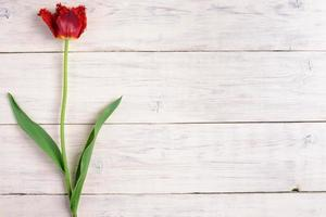 fiore rosso del tulipano su fondo di legno. vista dall'alto, copia spazio foto