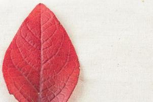 foglia rossa caduta