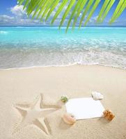 conchiglie delle stelle marine dello spazio della copia dello spazio in bianco caraibico della spiaggia