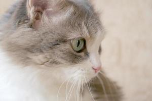 bel gatto foto