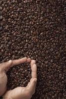 chicchi di caffè in mani umane a coppa foto