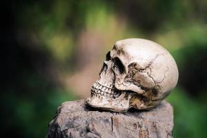 teschio umano su legno secco foto