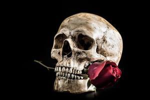 cranio di natura morta