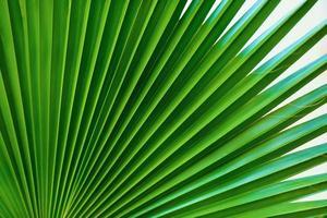primo piano foglia di palma foto