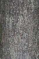 alto vicino della corteccia di albero