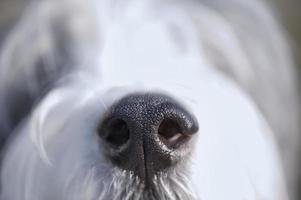naso del cane da vicino foto