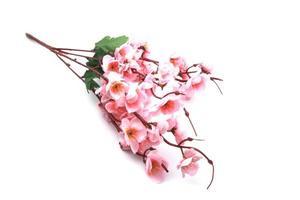 modello in fiore di ciliegio foto