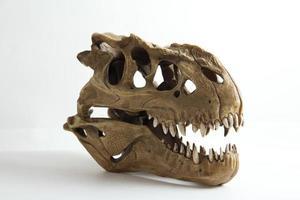 modello di teschio tirannosauro foto