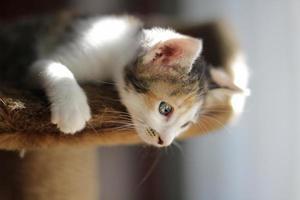 gatto domestico foto