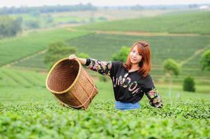 belle foglie di tè di raccolto della donna dell'Asia in piantagione, concetto di stile di vita foto