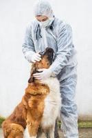 il veterinario ispeziona e controlla un cane. foto