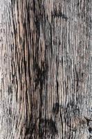 trama di legno vecchio e secco macro dettaglio in legno legname foto